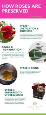 Eternal Preserved Roses Infographic.png